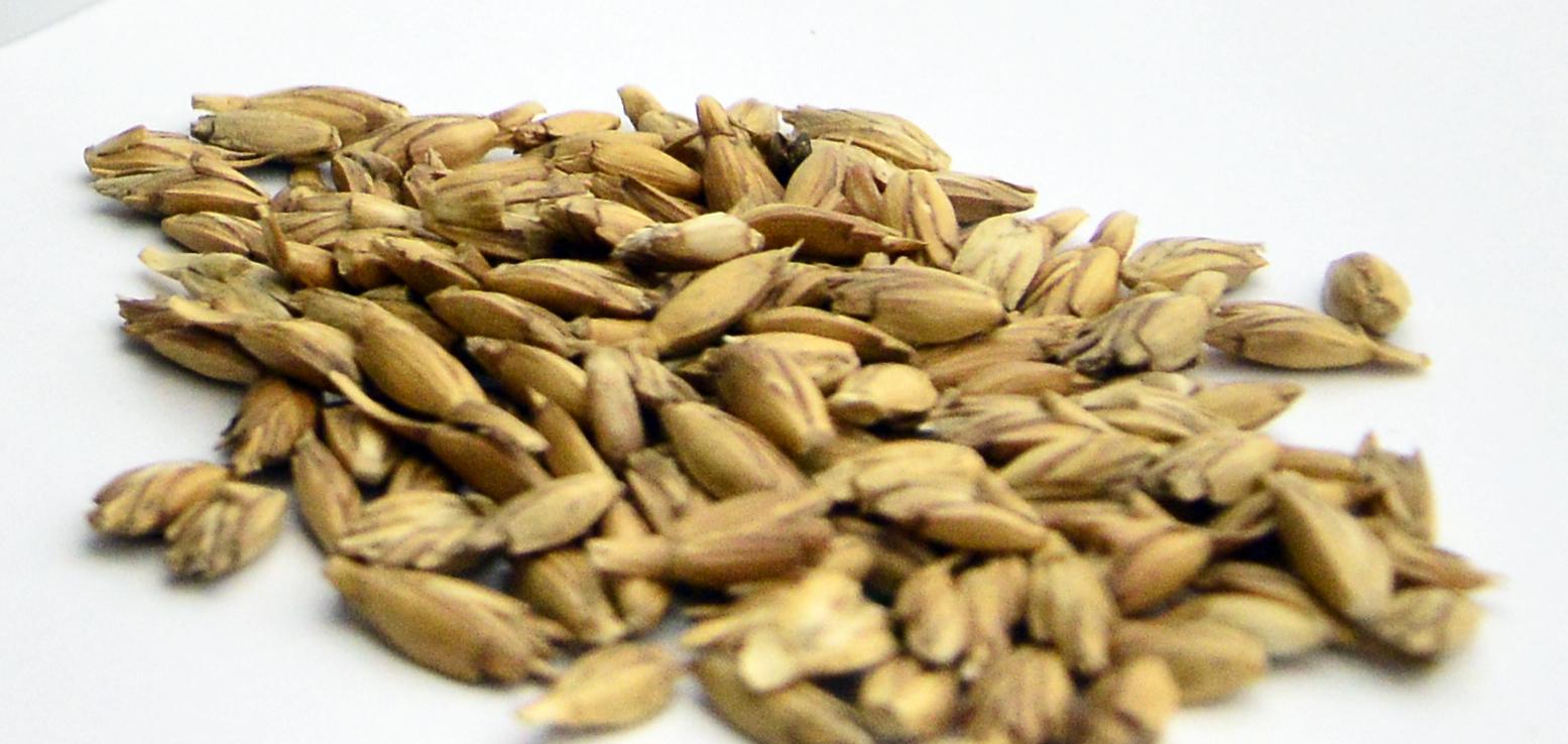 Spelt – the ancient grain